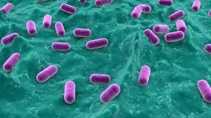 Hvad du især bør vide om probiotika: Du er hvad din bakterier spiser – del 4 ud af 5
