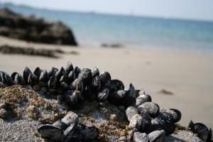 Havets blå vitaminbomber