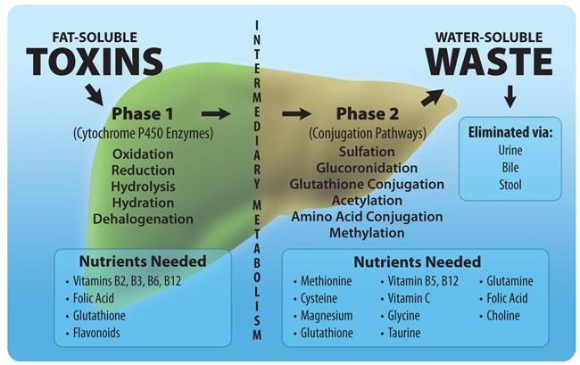 juicedetox- lever -detox- fase 1- fase 2