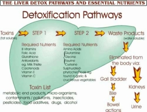 Detox din Hverdag
